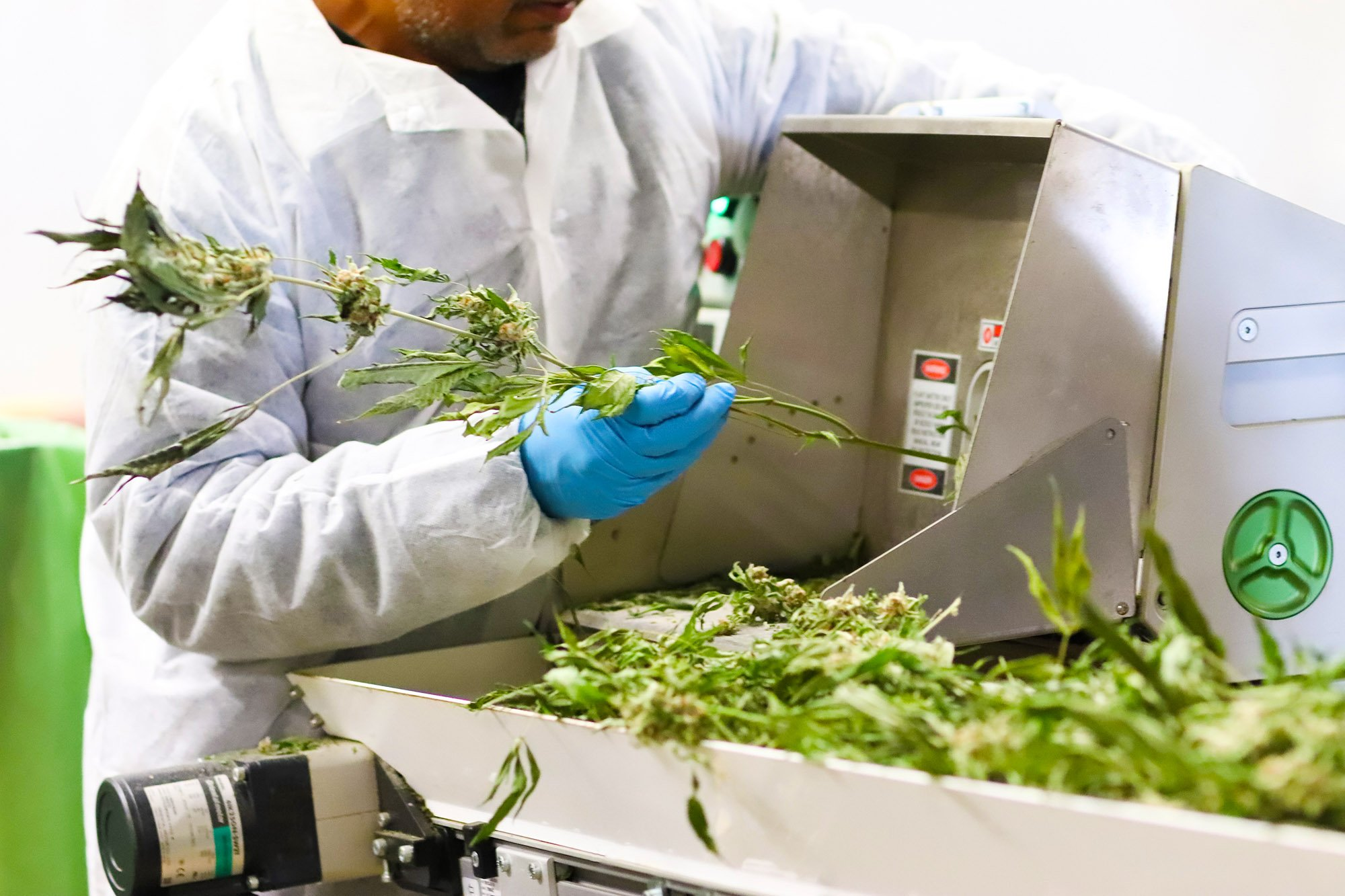 Greenbrier Holdings worker processing cannabis