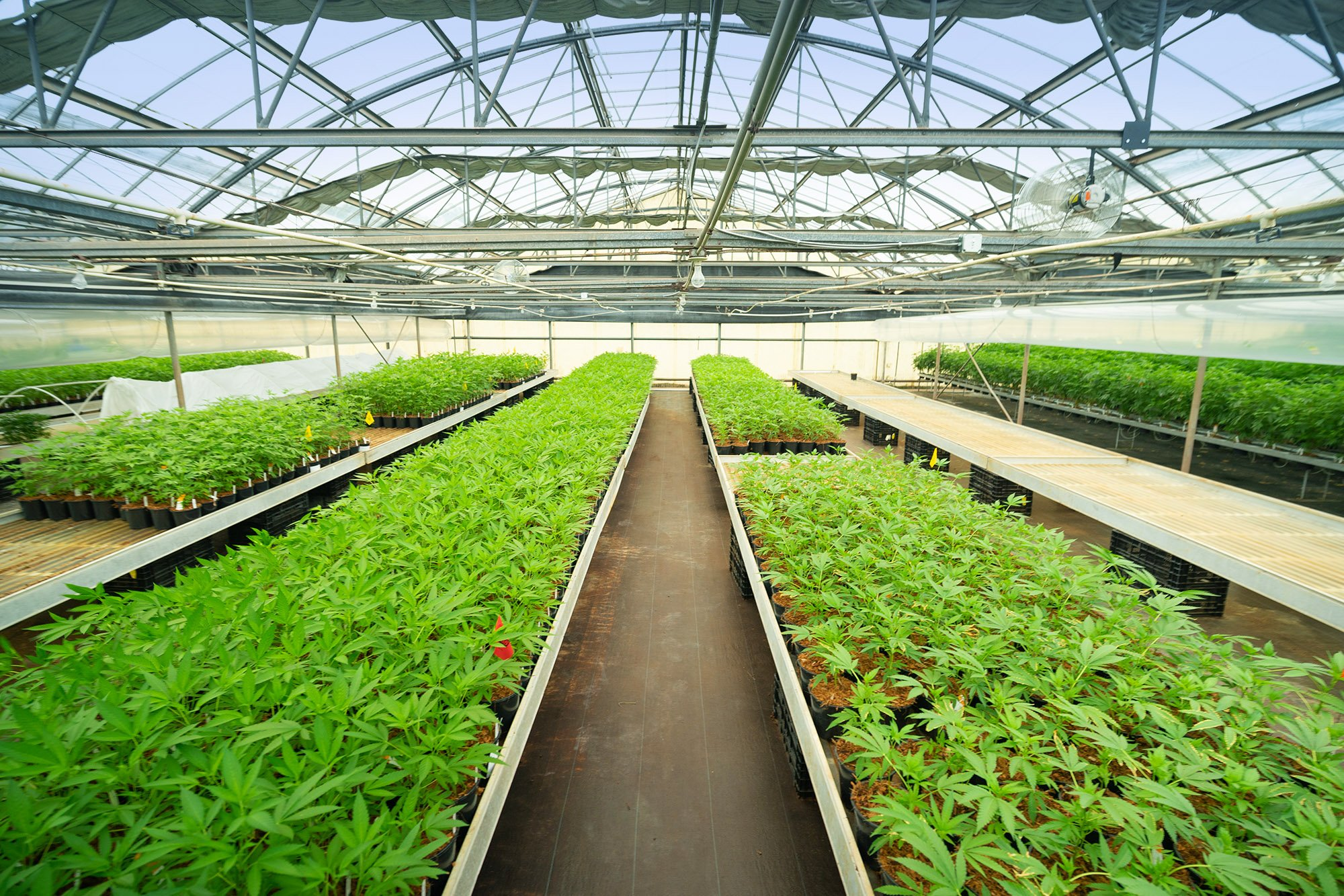 Greenbrier Holdings greenhouse
