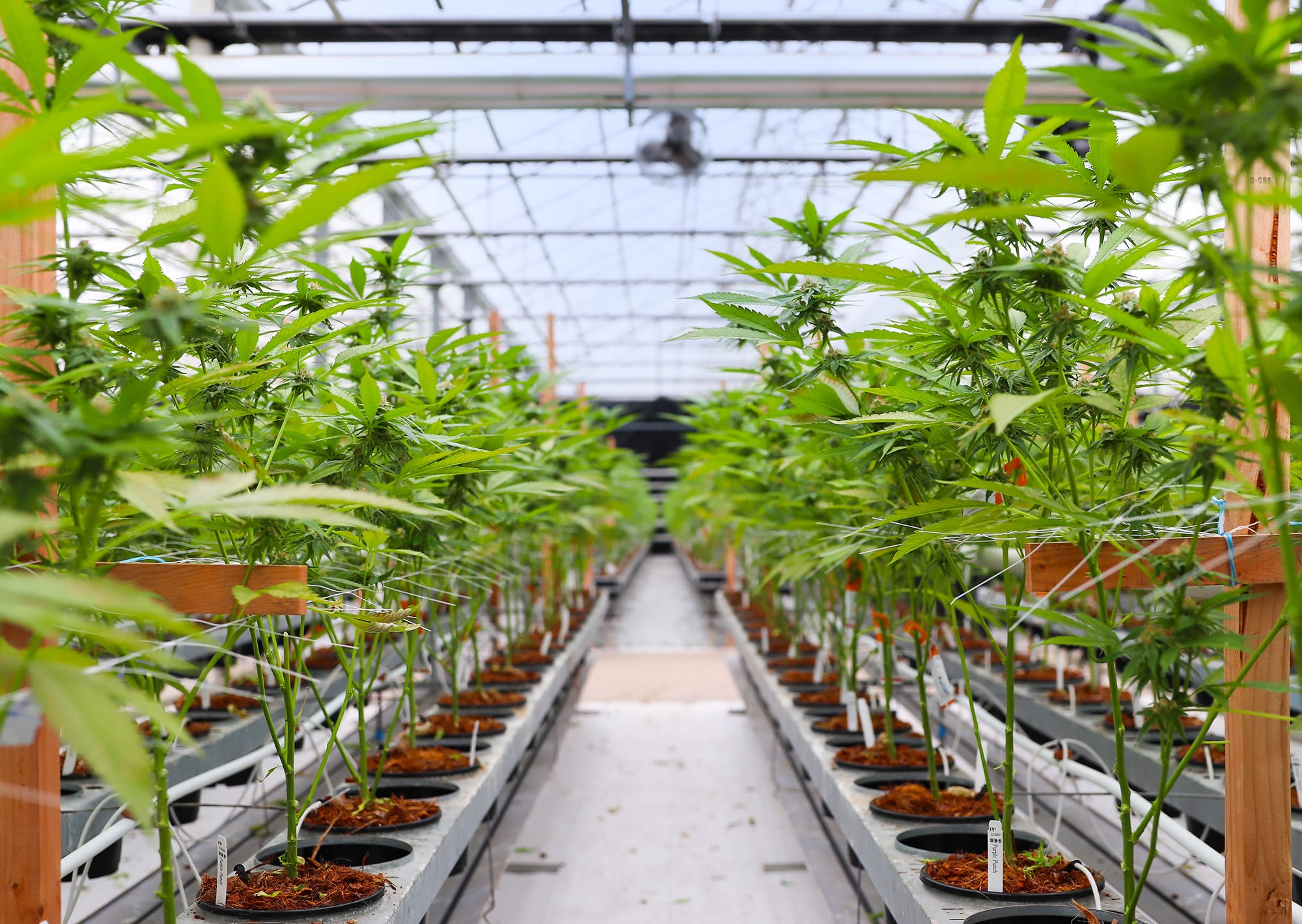 Greenbrier Holdings cannabis greenhouse